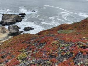Red and green plants leading down to cliff to ocean